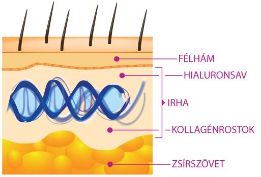 A bőr összetétele